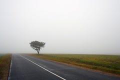 Δέντρο και δρόμος στην ομίχλη Στοκ φωτογραφίες με δικαίωμα ελεύθερης χρήσης