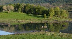 Δέντρο και σκιά Στοκ φωτογραφία με δικαίωμα ελεύθερης χρήσης