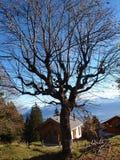 Δέντρο και σπίτι στο rigi moutain Στοκ φωτογραφία με δικαίωμα ελεύθερης χρήσης