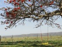 Δέντρο και ταλάντευση με το φράκτη στοκ εικόνα