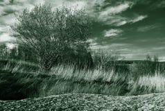 Δέντρο και τοπίο Στοκ Φωτογραφίες