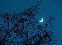Δέντρο και φεγγάρι στοκ φωτογραφία με δικαίωμα ελεύθερης χρήσης