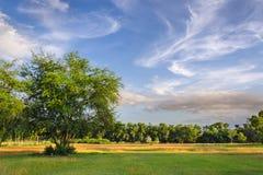 Δέντρο και φως του ήλιου Στοκ Εικόνα