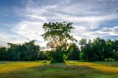 Δέντρο και φως του ήλιου Στοκ Εικόνες