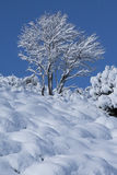 Δέντρο και χιόνι Στοκ Εικόνα
