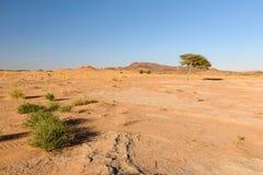 Δέντρο και χλόη στην έρημο, Ouzina, Μαρόκο Στοκ Φωτογραφίες