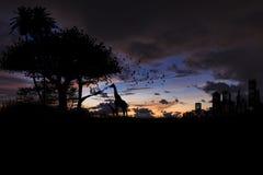 Δέντρο και giraffe σκιαγραφιών στο ηλιοβασίλεμα Στοκ Εικόνα