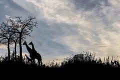 Δέντρο και giraffes σκιαγραφιών στο ηλιοβασίλεμα Στοκ φωτογραφία με δικαίωμα ελεύθερης χρήσης