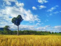 Δέντρο καρδιών κάτω από το μπλε ουρανό Στοκ εικόνα με δικαίωμα ελεύθερης χρήσης