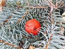 Δέντρο καρφιτσών Στοκ εικόνα με δικαίωμα ελεύθερης χρήσης