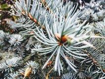 Δέντρο καρφιτσών Στοκ Φωτογραφίες
