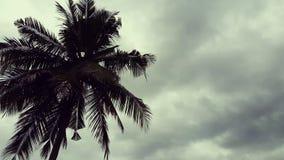 Δέντρο καρύδων και τροπικό δάσος απόθεμα βίντεο