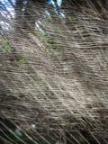 Δέντρο καρύδων με ένα φύλλο και ένα νεφελώδες υπόβαθρο στοκ εικόνα με δικαίωμα ελεύθερης χρήσης
