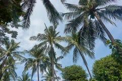 Δέντρο καρύδων με το φωτεινό ουρανό, φυτεία καρύδων Στοκ εικόνες με δικαίωμα ελεύθερης χρήσης