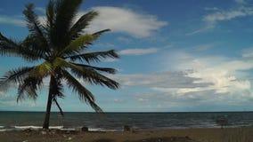 Δέντρο καρύδων που αυξάνεται από την παραλία κάτω από το σαφή μπλε ουρανό απόθεμα βίντεο