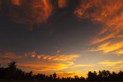 Δέντρο καρύδων σκιαγραφιών του υποβάθρου ηλιοβασιλέματος ουρανού στοκ εικόνα