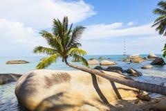 Δέντρο καρύδων στην παραλία καρύδων στο νησί γιων, Kien Giang, Βιετνάμ Κοντά στο νησί Phu Quoc Στοκ Φωτογραφίες