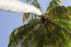 Δέντρο καρύδων στην τροπική παραλία στοκ φωτογραφίες
