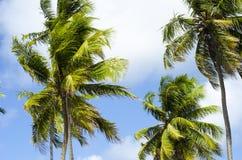 Δέντρο καρύδων στην τροπική παραλία στοκ εικόνες με δικαίωμα ελεύθερης χρήσης