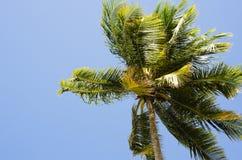 Δέντρο καρύδων στην τροπική παραλία στοκ εικόνα με δικαίωμα ελεύθερης χρήσης