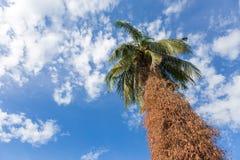 Δέντρο καρύδων στον ουρανό στοκ εικόνες