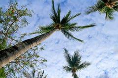 δέντρο καρύδων Στοκ φωτογραφία με δικαίωμα ελεύθερης χρήσης