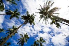 Δέντρο καρύδων στοκ εικόνες με δικαίωμα ελεύθερης χρήσης