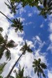 Δέντρο καρύδων στοκ φωτογραφία