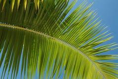 δέντρο καρύδων στοκ εικόνα με δικαίωμα ελεύθερης χρήσης