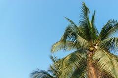 Δέντρο καρύδων με τον ουρανό στο καλοκαίρι στοκ εικόνα με δικαίωμα ελεύθερης χρήσης