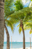 Δέντρο καρύδων στην παραλία Στοκ εικόνα με δικαίωμα ελεύθερης χρήσης