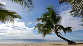 Δέντρο καρύδων στην παραλία Στοκ Εικόνες