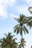 Δέντρο καρύδων στην παραλία Στοκ Φωτογραφίες