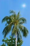 Δέντρο καρύδων στο φως του ήλιου και το μπλε ουρανό Στοκ Εικόνα