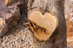 Δέντρο καρδιών Στοκ Εικόνες