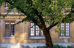 Δέντρο κερασιών μπροστά από το κολλέγιο της Clare, Καίμπριτζ, Αγγλία στοκ εικόνες