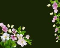 Δέντρο κερασιών, όμορφο άνθισμα διανυσματική απεικόνιση