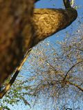 Δέντρο κερασιών Στοκ φωτογραφία με δικαίωμα ελεύθερης χρήσης