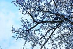Δέντρο κλάδων χειμερινού χιονιού που καλύπτεται Στοκ Εικόνες