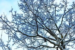 Δέντρο κλάδων χειμερινού χιονιού που καλύπτεται στοκ φωτογραφία