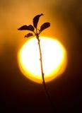 δέντρο κλάδων Στοκ Εικόνα