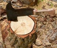 δέντρο κολοβωμάτων τσεκ&o Στοκ εικόνα με δικαίωμα ελεύθερης χρήσης