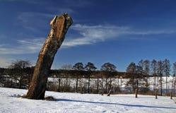 δέντρο κολοβωμάτων Στοκ εικόνα με δικαίωμα ελεύθερης χρήσης