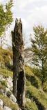 δέντρο κολοβωμάτων Στοκ Εικόνες