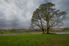 Δέντρο κοντά σε Wray Castle στοκ εικόνα