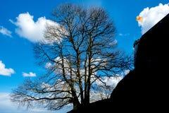 Δέντρο κοντά στην ακρόπολη του Ναμούρ Στοκ Φωτογραφίες