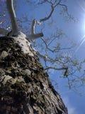 Δέντρο κοντά στο πανεπιστήμιο της δυτικής Βιρτζίνια στοκ φωτογραφία