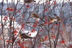 δέντρο κοπαδιών κλάδων κο& Στοκ εικόνα με δικαίωμα ελεύθερης χρήσης