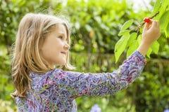 Δέντρο κοριτσιών και κερασιών Στοκ εικόνες με δικαίωμα ελεύθερης χρήσης