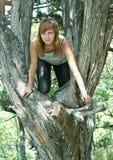 δέντρο κοριτσιών Στοκ Φωτογραφία